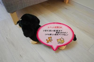 M.hills南堀江south犬.jpg